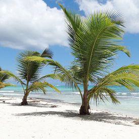Caraïbes Aperçu