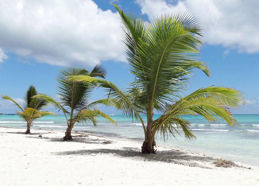 Caribbean Eiland Saona van Iwona Sdunek alias ANOWI