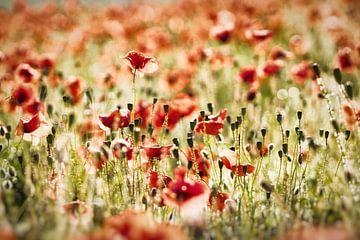 Vintage poppies van Francois Debets