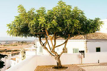 Baum vor Landschaft von Heiko Westphalen