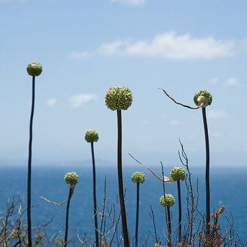 Bloemen aan zee van Hannie Bom