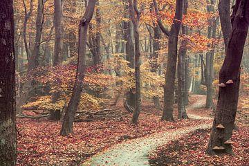 Der Weg zum Gehen von Lars van de Goor