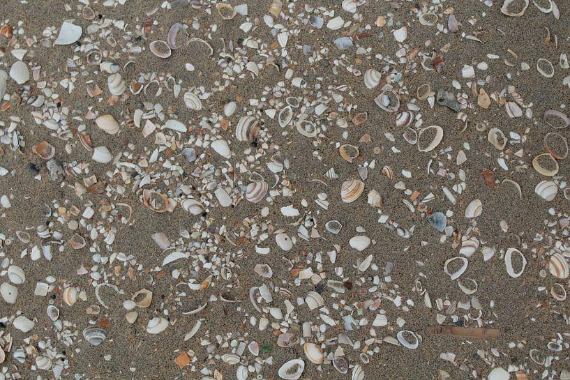 Schelpen in het zand van Marijke Slieker