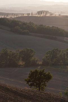 Boom in de Toscaanse heuvel. van Rens Kromhout