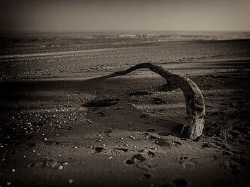 Op het strand von Paolo Gant