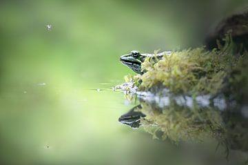 Frosch von Rianne van Diemen