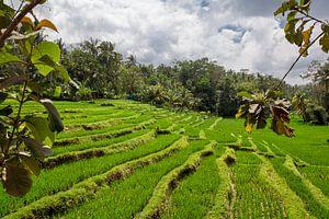 Bali rijstterrassen. De mooie en dramatische rijstvelden. Een echt inspirerend landschap