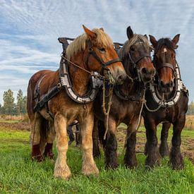 Trekpaarden op een akker van Bram van Broekhoven