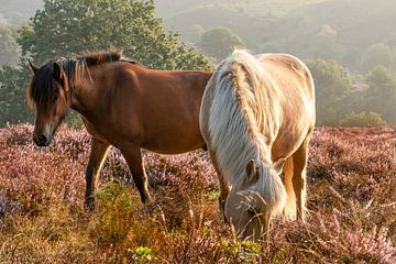 Paarden op de Heide in Bloei van Klaas Doting