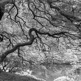 Grillige esdoorn in een Japanse tuin (zwart-wit) van Jonathan Vandevoorde