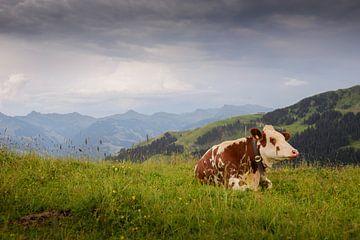 Koe in Oostenrijkse Alpen van