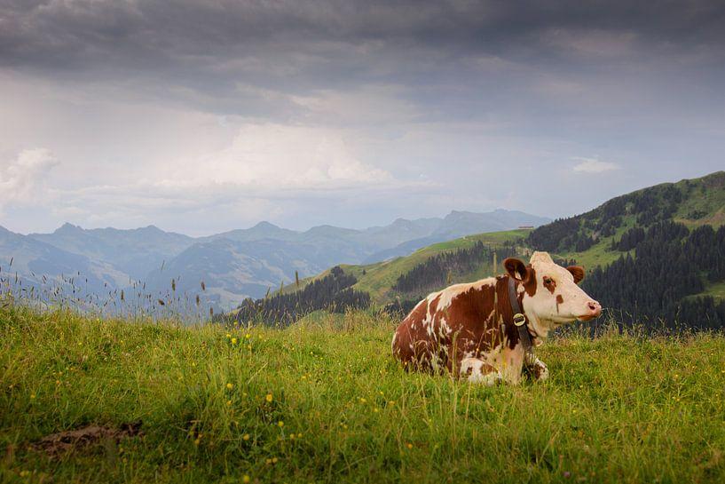 Koe in Oostenrijkse Alpen van Philippos Kloukas