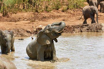 Afrikanischer Elefant in einem Schlammpool von Jolene van den Berg