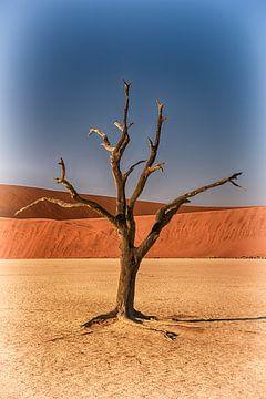 Baum im Deadvlei Namibia von Danielle van Leeuwaarden