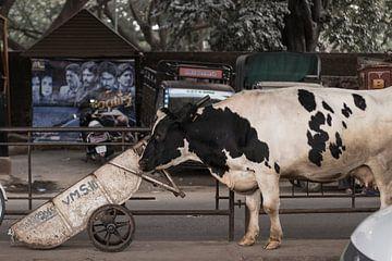 The Holy Cow van Jan-Willem van Vulpen