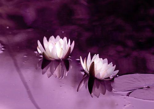 Waterlilies van Rosi Lorz