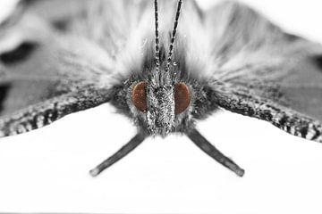 Butterfly van Malte Pott
