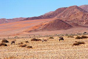 Gemsbokken woestijn landschap kleuren , Namibie