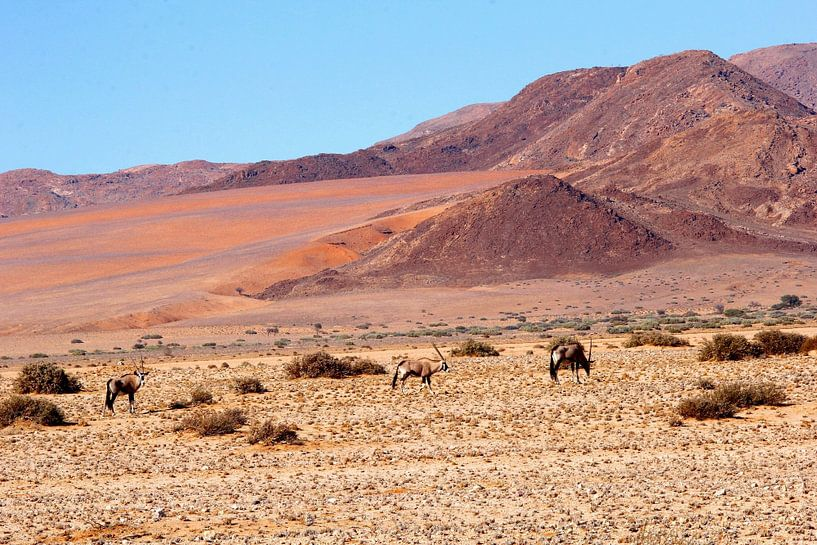 Oryx purperen woestijn, Namibië van Inge Hogenbijl
