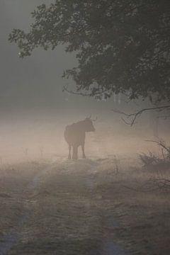 koe in de mist van