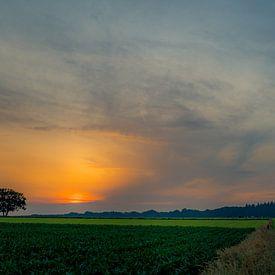 eenzame boom van peterheinspictures