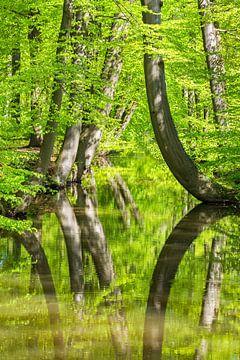 Baumstämme im Wald mit Reflexion im Wasser des Waldstroms von Ben Schonewille