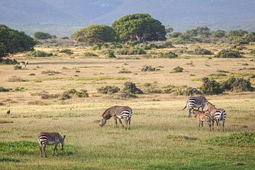 Zebra's in heuvelachtig landschap van Zuid-Afrika van Simone Janssen