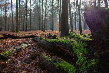 Boomstam in het mastbos met groen mos van Marco Leeggangers