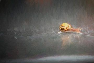 Through the rain (slak) sur Hans Soowijl