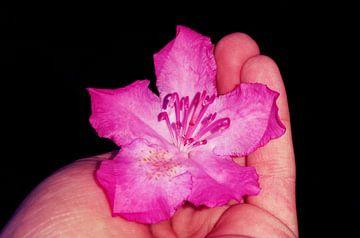 bloem hand van Lucas Joël Smeenge