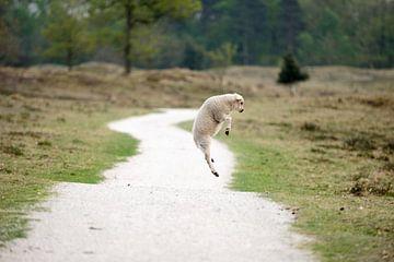 Springend lammetje von Merijn van der Vliet