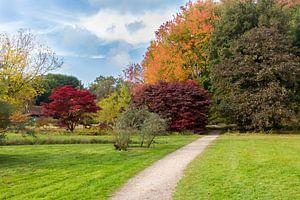 Herfst wandelpad