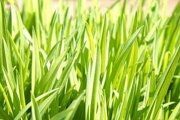 Groen gras van Jan Brons