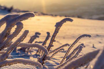 Kalte Sonnenstrahlen von Tom Voelz