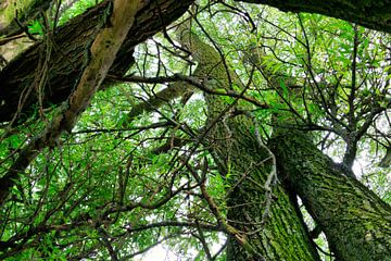Wirrwarr von Bäumen von Photo Henk van Dijk