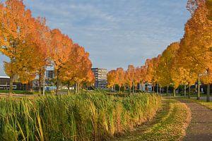 Herfst in Weert van Jolanda de Jong-Jansen