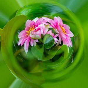 roze waterlelies, planet compositie