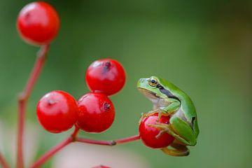 Treefrog sur Adriaan Westra