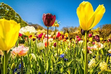Kleurrijke tulpen sur Stedom Fotografie