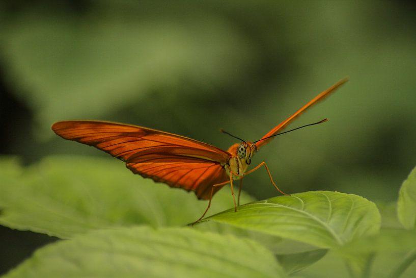 Oranje vlinder op groene bladeren van Geke Woudstra