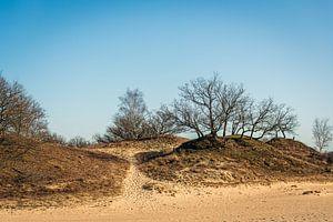 Zandheuvels met kale bomen en dorre heide
