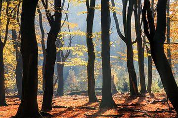 Speulderbos herfstsilhouetten van Dennis van de Water