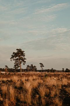 National Park De Loonse en Drunense Duinen