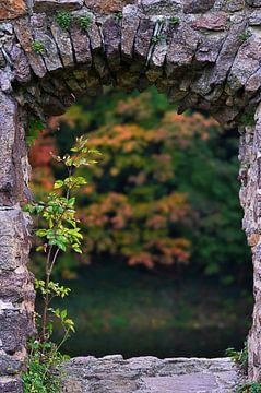 Die Natur kehrt zurück von zwergl 0611