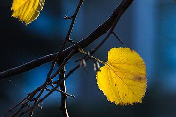 Geel&blauwe herfst van Jeroen den Ouden