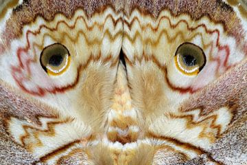 Nahaufnahme der Flügel einer Motte von Simon Hazenberg