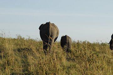 wegwandelende olifanten van Laurence Van Hoeck