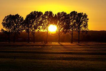 Sonnenuntergang Wiese mit Bäumen von Devlin Jacobs