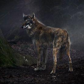 Wolf von Photographix by Moni Schmitt Monika