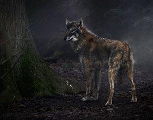 Wolf von
